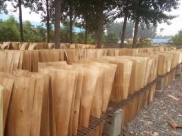 桦木异形单板价格