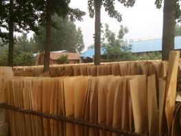 桦木异形单板厂家