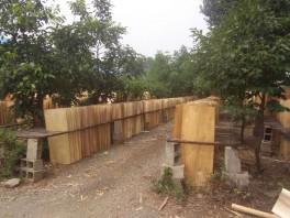 桦木异形单板